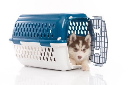 Puppy Guide: How to bring a puppy home in the car